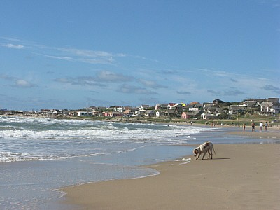 free images  beach, sand, summer, day, outdoors, outside, dog,