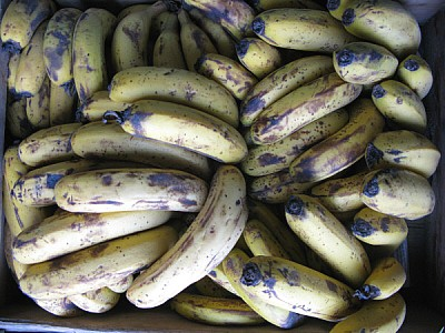 free images  fruit, fruits, banana, bananas, front view, green,
