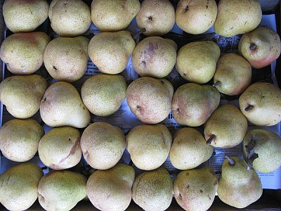 free images  fruit, fruits, pear, pears, front view, green, gre