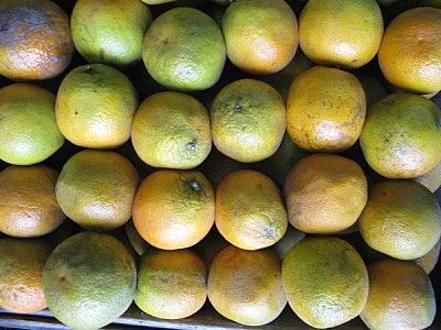 free images  fruit, fruits, orange, oranges, lemons, front view