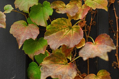 free images  background, background, leaf, leaves, nature, fall