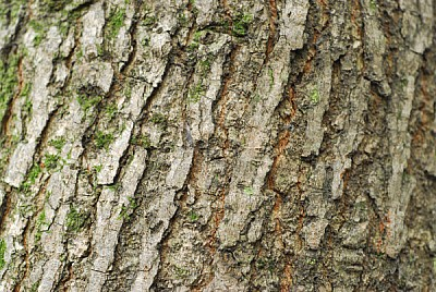 free images  background, background, wood, tree, front view, st