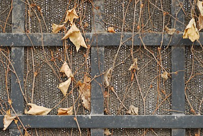 free images  autumn, leaf, leaves, front view, vine, dry, dry,