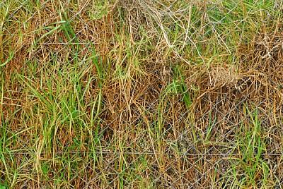 free images  background, background, wire, front view, grass, p