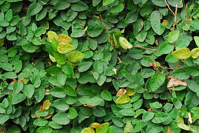 free images  leaf, leaves, green, plant, plants, front view, ba