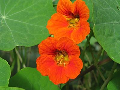 flower, flowers, nature, front view, color, orange