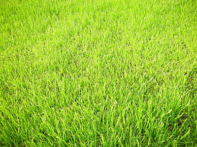 prod03, grass, green, lawn, background, background