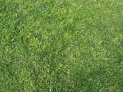 Texture green grass background