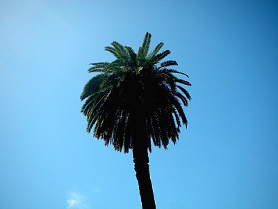 free images  prod04, palm tree, seen from below, tree, blue sky