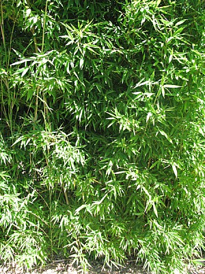 free images  plant, planting, reed, cane, close-up, front view,