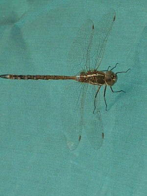 animal, animals, wildlife, insect, insects, dragon