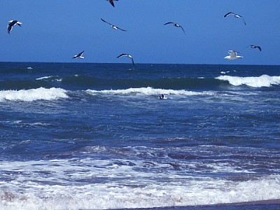 free images  Argentina, Atlantic ocean, day, outdoor, outside,
