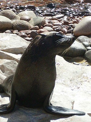 free images  animal, animals, seal, seals, front view, sunbathi