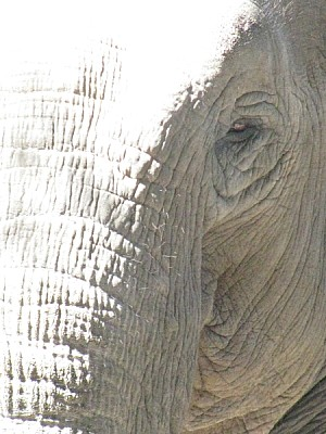 free images  Reflection of the sun on elephant's head