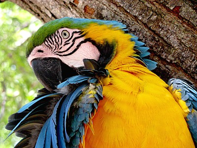 free images  animal, animals, wildlife, wild bird, bird, macaw,