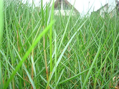 free images  green, grass, grass, overhead view, close-up, natu