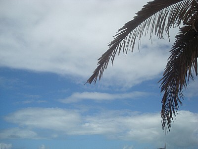 free images  sky, palm facing forward, beach, summer vacation c