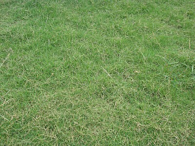 free images  grass, grass, green, background, background, seen