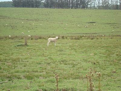 field, rural scene, Argentina, animal, animals, fr