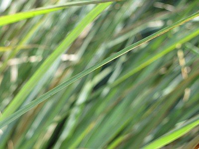 free images  grass, lawn, front view, green, background, backgr