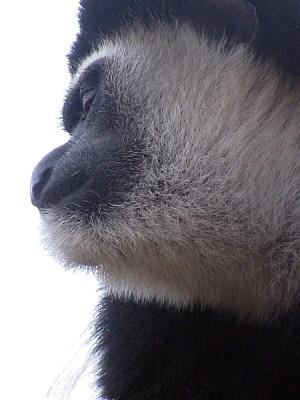 free images  animal, animals, wild, wild, outdoor, monkey, monk