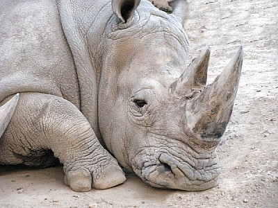 free images  animal, animals, wild, front view, head, nobody, r