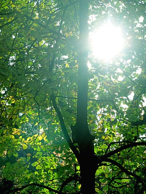 free images  nature, landscape, forest, tree, trees, sun, sunse