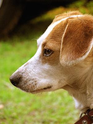 animal, animals, dog, pet, mascostas, garden, outd