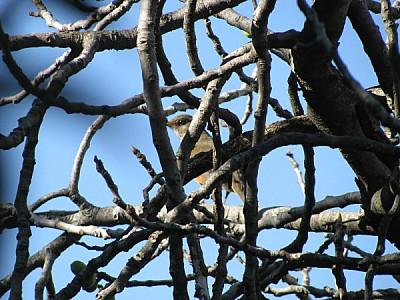 bird, birds, bird, birds, sparrow, branch, branche