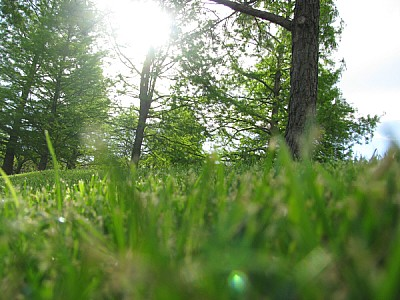 free images  prod06, outdoors, day, exterior, green, forest, no