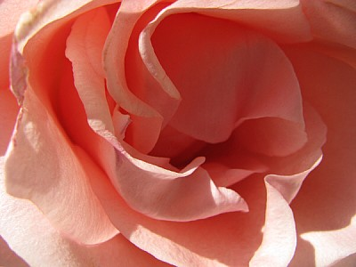 free images  prod06, Aroma, Aromas, Botany, Color, Detail, Deta