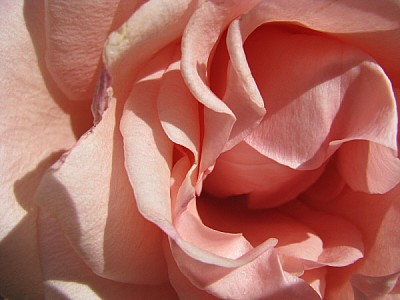 prod06, Aroma, Aromas, Botany, Color, Detail, Deta