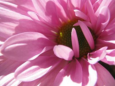 prod06, flower, flowers, pink, nature,