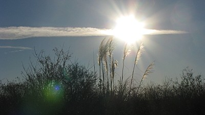 free images  prod06, sky, field, rural scene, sun, sunset, clou