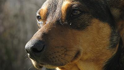 prod06, animal, animals, dog, dogs, profile view,