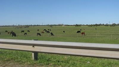 prod06, field, rural scene, cow, cows, animal, ani