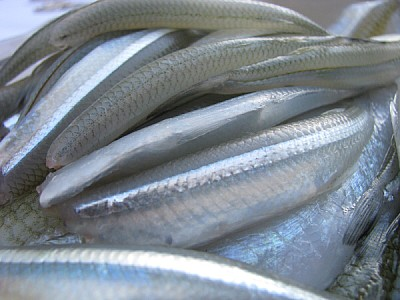 free images  Fillets of pejerrey