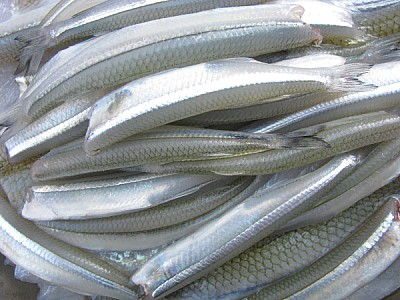 free images  prod06, food, meals, filet, steak, mackerel, fish,