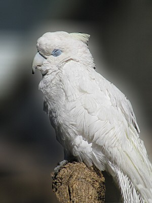 free images  prod06, bird, birds, bird, birds, parrot, cockatoo