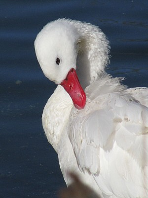 free images  prod06, bird, birds, animal, animals, outdoors, ou