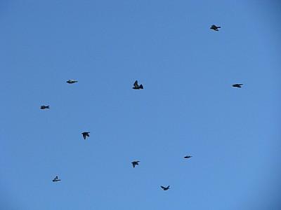 free images  prod06, bird, birds, bird, birds, animal, animals,