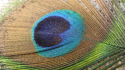 free images  Colorful feather