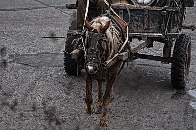 , Cart, horse, wine rack, Cartonero, poverty, prod