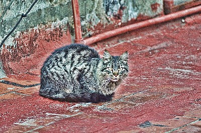 , Prodjune2010, AGO2010, cat, animal, pet, terrace