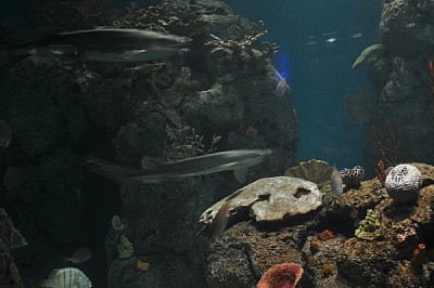free images  Interior sea, aquarium, nobody, front view, fish,