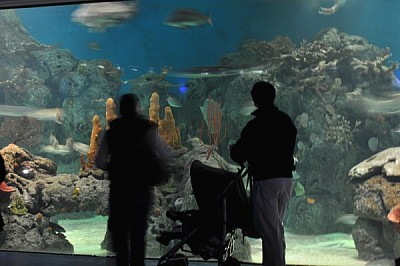 free images  Interior aquarium, people, family, spectacle, recr