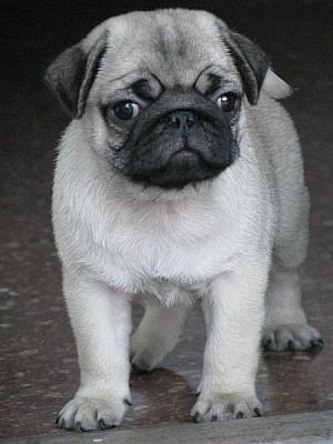 , Animal, animals, pet, pets, puppy, small ± o, ba