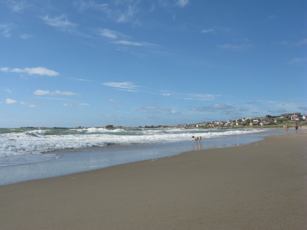 beach, sand, summer, day, outdoors, outside, dog, dogs, animal, front view, water, sea, coast, foam, out polonium, Uruguay, South america, america, latin america, bath, bathing, landscape city??, watching, looking, looking, floor,