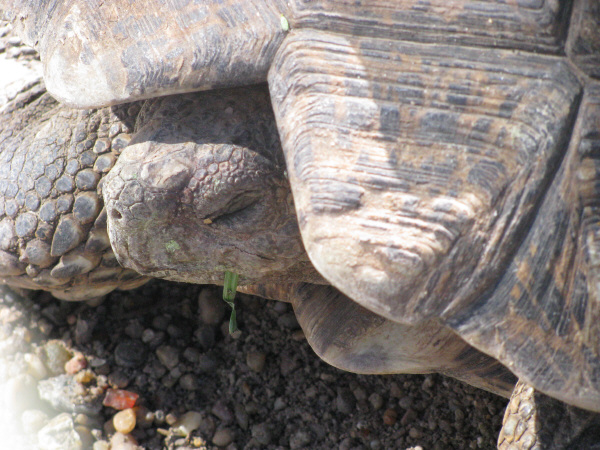 animal, animals, turtle head, carapace, reptile, front view, close-up, dry texture, slow, slowly, prod05