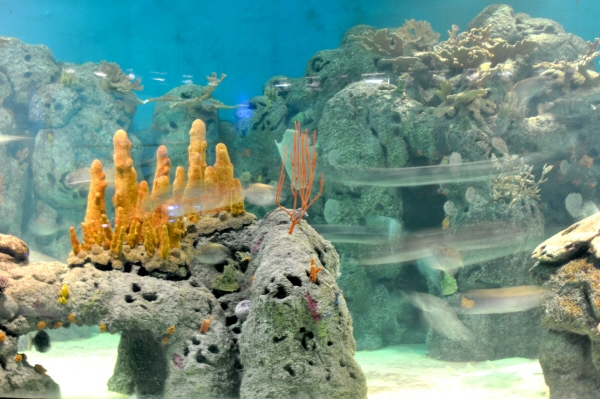 , Aquarium, fish, fish, interior, light, lights, lit, coral, background, sea movement, AGO2010